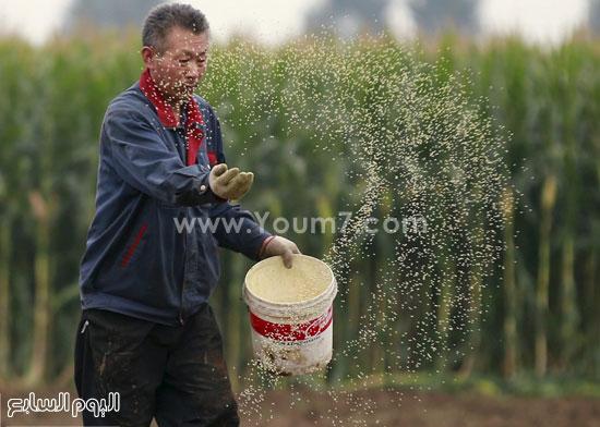 .العناية بالأرض قبل وبعد حصاد محصول الذرة -اليوم السابع -10 -2015