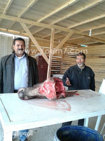 شوادر اللحوم (6)