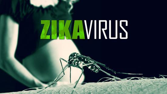 أثر فيروس زيكا على الأجنة (3)
