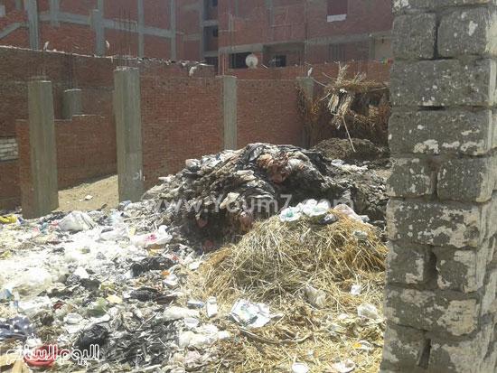 صحافة المواطن، تراكم القمامة، صرف صحى، قرية الرملة، منطقة الجزيرة  (6)