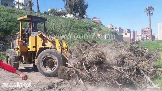 نقل المخلفات الزراعية إلى المقالب العمومية بالاسكندرية (1)