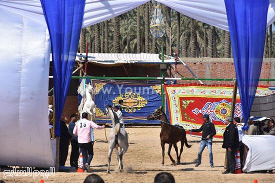 مهرجان-البحيرة-الدولى-التاسع-للخيول-العربية-الأصيلة-(1)