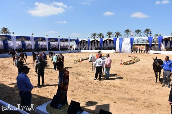 مهرجان-البحيرة-الدولى-التاسع-للخيول-العربية-الأصيلة-(4)
