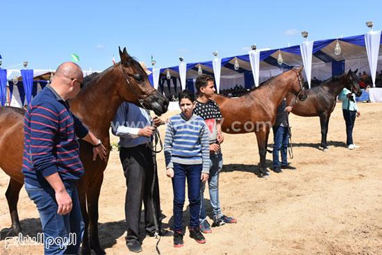 مهرجان-البحيرة-الدولى-التاسع-للخيول-العربية-الأصيلة-(5)