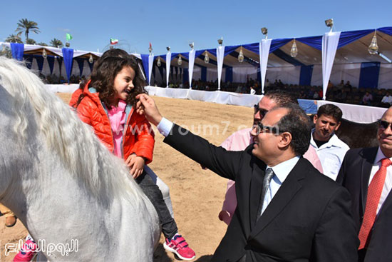 مهرجان-البحيرة-الدولى-التاسع-للخيول-العربية-الأصيلة-(9)