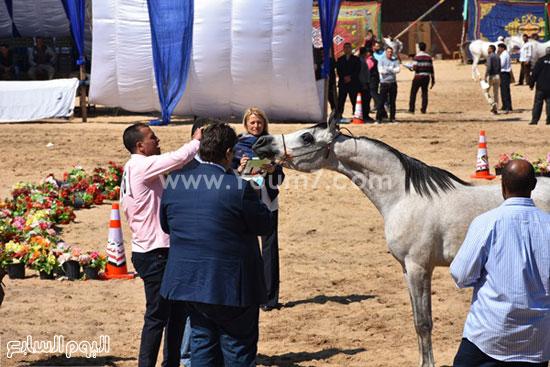 مهرجان-البحيرة-الدولى-التاسع-للخيول-العربية-الأصيلة-(14)