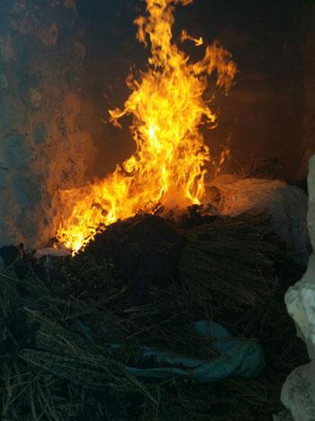 ضبط وحرق 4 مزارع نباتات مخدرة (3)