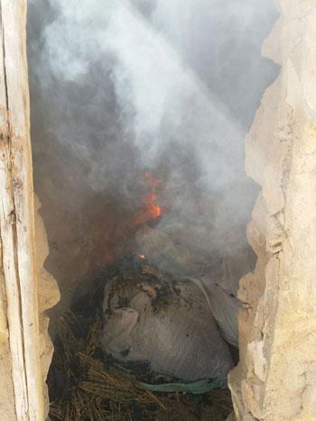 ضبط وحرق 4 مزارع نباتات مخدرة (6)