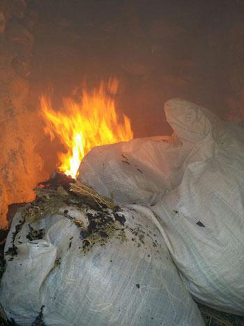 ضبط وحرق 4 مزارع نباتات مخدرة (8)