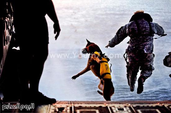 أحد الجنود مع كلبه يقفزون فى الماء -اليوم السابع -4 -2015