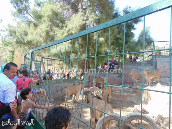 أطفال يلعبون مع الحيوانات -اليوم السابع -4 -2015
