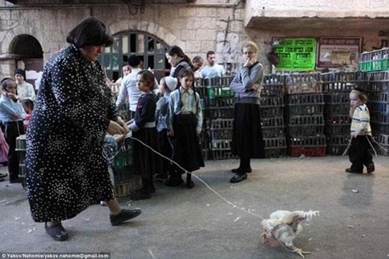 امرأة تنزه دجاجتها لتنقل خطاياها فى العام الماضى لروح الحيوان وتدخل السنة الجديدة بروح طاهرة -اليوم السابع -4 -2015
