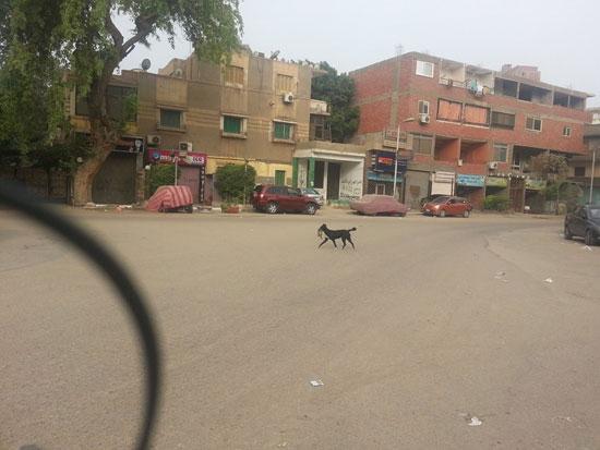الكلب يواصل السير بالقطة -اليوم السابع -4 -2015