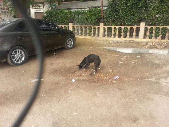 الكلب أثناء دفن القطة -اليوم السابع -4 -2015
