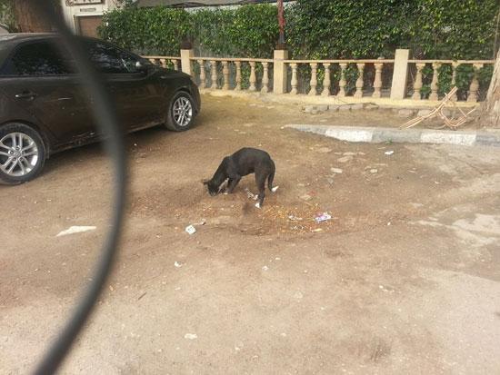 الكلب يهيل التراب على القطة -اليوم السابع -4 -2015