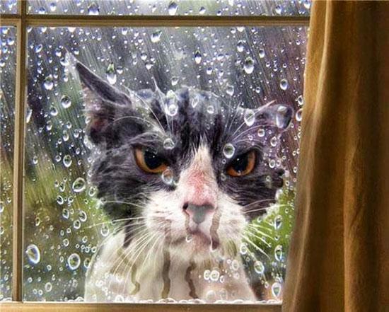 تبدو على هذه القطة علامات الشر فى طلبها للدخول للمنزل. -اليوم السابع -5 -2015