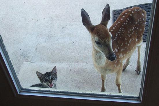على ما يبدو أن هذه القطة اصطحبت صديقتها