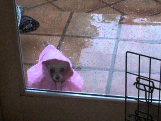 دعونى ادخل إنها تمطر. -اليوم السابع -5 -2015