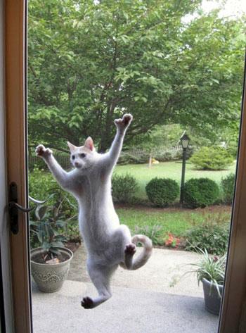 على طريقة الرجل العنكبوت تحاول هذه القطة تسلق الزجاج. -اليوم السابع -5 -2015