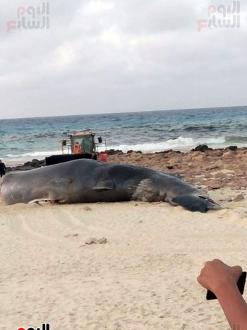 انتشال الحوت (1)