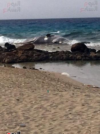 انتشال الحوت (12)