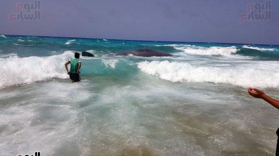 انتشال الحوت (4)