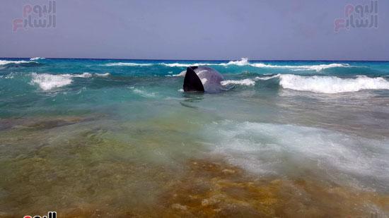 انتشال الحوت (5)