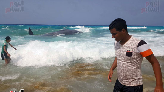 انتشال الحوت (6)