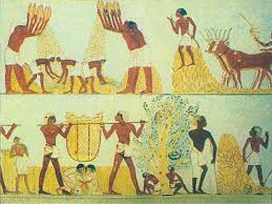 موسم الحصاد عند الفراعنة (1)