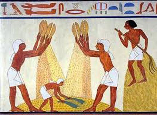 موسم الحصاد عند الفراعنة (2)