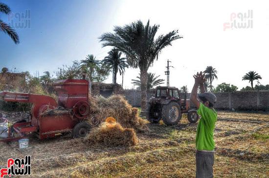 موسم الحصاد عند الفراعنة (6)