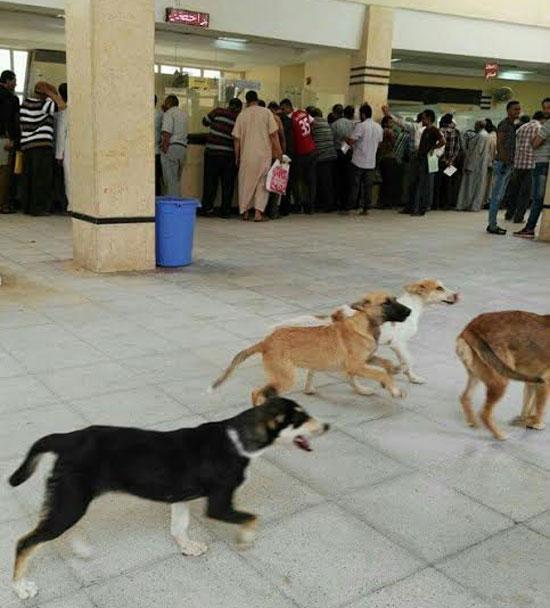 كلاب-داخل-وحدة-مرور-برج-العرب-بالإسكندرية-(1)