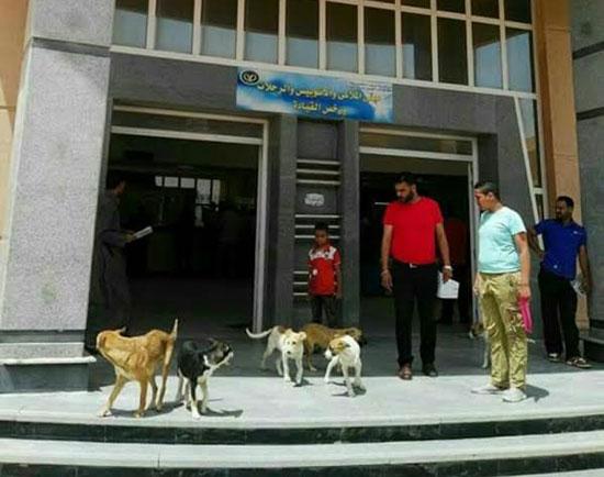 كلاب-داخل-وحدة-مرور-برج-العرب-بالإسكندرية-(2)