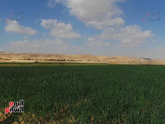 قرى فقيرة فى أسيوط (7)