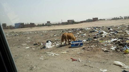 صحافة المواطن ، صور وابعت،   منطقة اثرية،مقلب للقمامة ، ماوى للكلاب ، المنطقة الجنوبية، اسيوط  (9)