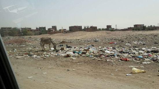 صحافة المواطن ، صور وابعت،   منطقة اثرية،مقلب للقمامة ، ماوى للكلاب ، المنطقة الجنوبية، اسيوط  (11)