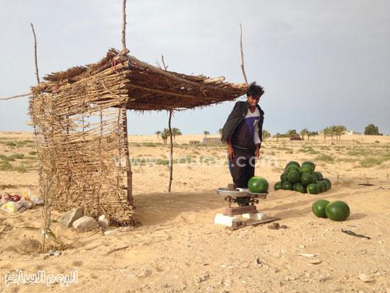 البطيخ السيناوى الخالى من الكيماويات يكسب فى رمضان -اليوم السابع -6 -2015