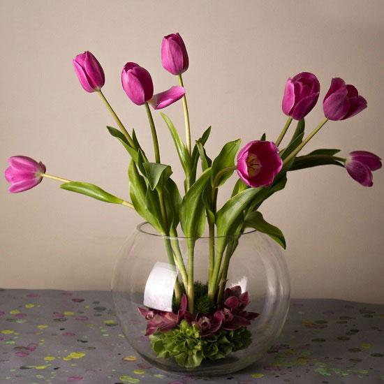التيوليب  من الزهور الفاخرة -اليوم السابع -6 -2015