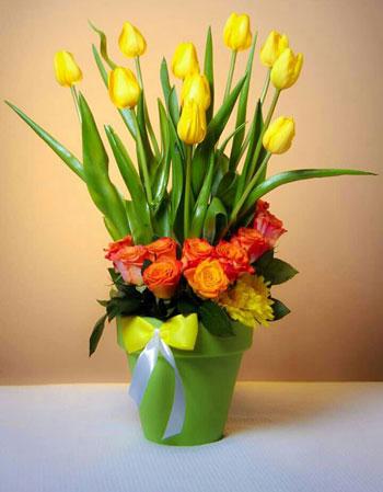 خليط من الورد والتيوليب  -اليوم السابع -6 -2015