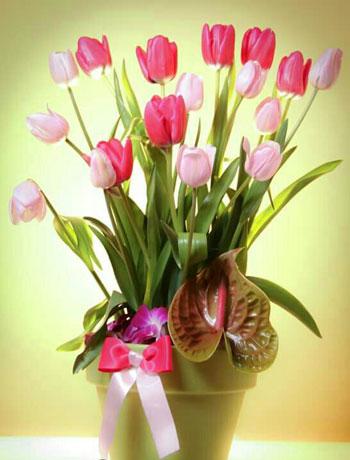 لتيوليب من الزهور الفاخرة الجميلة  -اليوم السابع -6 -2015