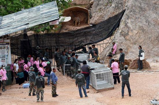 العثور على جثث 40 شبل نمر فى معبد بوذى فى تايلاند (11)