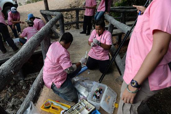 العثور على جثث 40 شبل نمر فى معبد بوذى فى تايلاند (13)