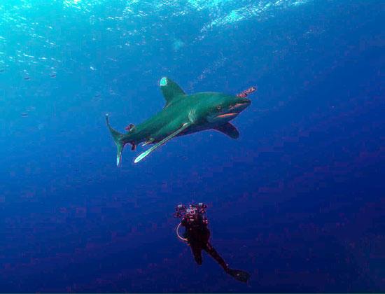سمك قرش (3)