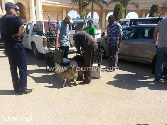 كلاب بوليسية تقوم بتفتيش الحقائب -اليوم السابع -7 -2015