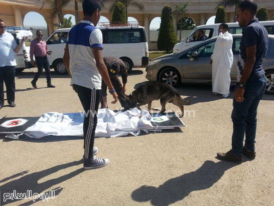 كلاب بوليسية تمشط محيط إستاد برج العرب -اليوم السابع -7 -2015