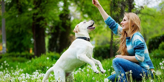 اصطحبى كلبك الأليف معك أثناء الركض -اليوم السابع -7 -2015