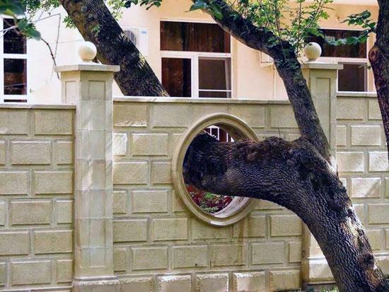 بالصور: معماريون يعدلون شكل 11 منزلا للحفاظ على الشجر  720153123732319