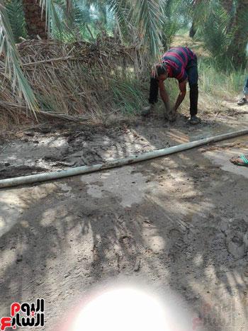 احتراق 500 نخلة فى مزرعة بمنطقة الشيخ صبيح بالخارجة (6)