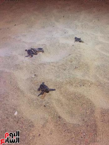 السلاحف البحريه (3)