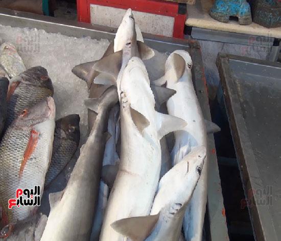 معقول غيم المجيد لحم سمك القرش Findlocal Drivewayrepair Com
